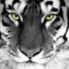 jakehoney Avatar image