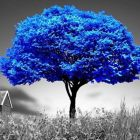 asharema Avatar image
