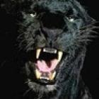 ip15's profile image